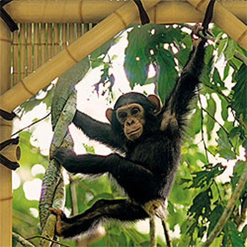 this item is no longer available wall mural monkey illustration graphic pixersize com